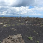 old lava field
